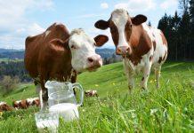 Süt İçmeyen Çocukların Boyu Kısa mı Kalır